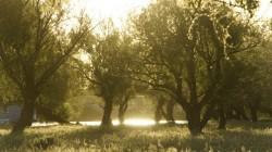 Weidenbäume im Wolgadelta