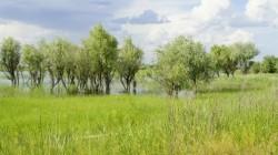 Wolgadelta wenige Kilometer vor Astrachan