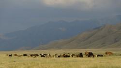 100 Kilometer vor Almaty