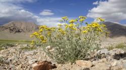 Nur einige Pflanzenarten haben sich auf die harten Bedingungen auf dem Tibet-Plateau eingestellt.