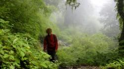 Während des Monsuns hängt meist dichter Nebel im subtropischen Regenwald.