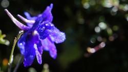 Nach dem Monsunregen leuchten die Farben der Blüten auf 4000 m besonders prächtig.